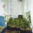 """Suore coltivano marijuana: """"Fumare per avvicinarsi a Dio"""" 3"""