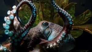 Polpo Inky scappa da acquario in Nuova Zelanda5