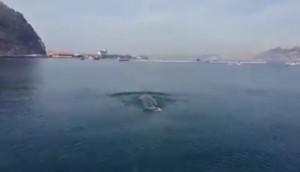 Balenottera avvistata nel golfo di Napoli3