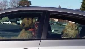 YOUTUBE Cane suona clacson: è stufo di aspettare in auto4