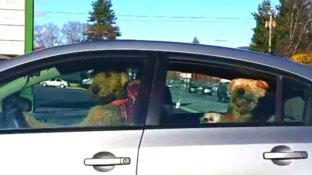 YOUTUBE Cane suona clacson: è stufo di aspettare in auto3