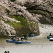 Ciliegi in fiore nel parco Shinjuku Gyoen di Tokyo3