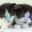 YOUTUBE Cuccioli di gatto colorati col pennarello indelebile