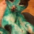 YOUTUBE Cuccioli di gatto colorati col pennarello indelebile7