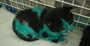 YOUTUBE Cuccioli di gatto colorati col pennarello indelebile3