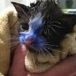 YOUTUBE Cuccioli di gatto colorati col pennarello indelebile2