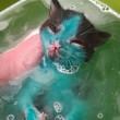 Cuccioli di gatto colorati col pennarello permanente