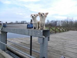 Guarda la versione ingrandita di 5 consigli per viaggiare con il cane in tutte le stagioni