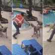 Entra in giardino, colpisce i cani con chiave inglese 3