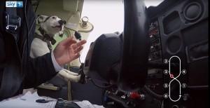 Esperimento tv: 3 cani proveranno a guidare l'aereo 3
