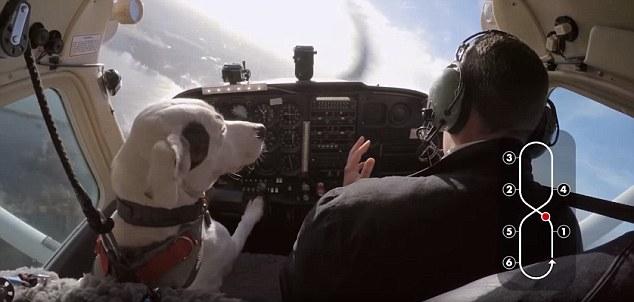 Esperimento tv: 3 cani proveranno a guidare l'aereo