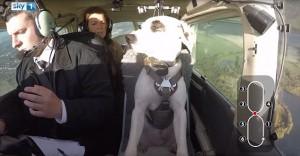 Guarda la versione ingrandita di YOUTUBE Esperimento tv: 3 cani proveranno a guidare l'aereo