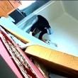Ladri in casa, telecamera riprende tutto3