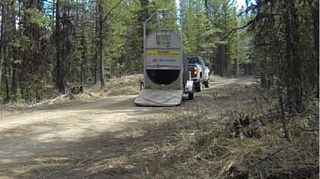 VIDEO YOUTUBE Orso liberato nel bosco: esce da gabbia e...