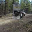 VIDEO YOUTUBE Orso liberato nel bosco: esce da gabbia e... 2