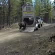 VIDEO YOUTUBE Orso liberato nel bosco: esce da gabbia e... 3