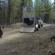 VIDEO YOUTUBE Orso liberato nel bosco: esce da gabbia e... 4