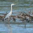 Petrolio genova: uccelli e pesci coperti greggio6