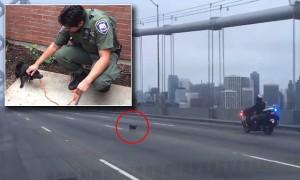 Polizia insegue chihuahua sul ponte di San Francisco4