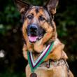 Cane della Marina Lucca premiato con una medaglia FOTO 3