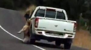 Cane appeso per il collo trascinato da furgoncino2
