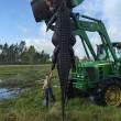YOUTUBE Alligatore gigante catturato: divorava le mucche