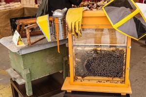 Ivrea, rubano anche le api! Ma che ci fai con un mln di api?