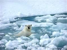 L' Artico