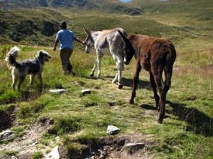 Sentiero asini su Alpi Italia-Austria: nuova rotta migranti