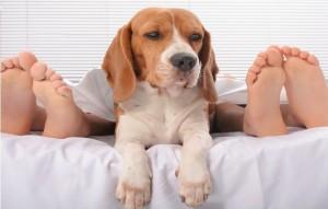 Divorzio: cane va alla moglie, marito paga gli alimenti