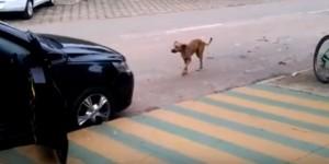 YouTube, cane sente la musica in strada e balla...