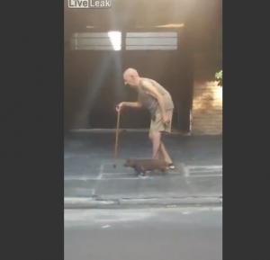 VIDEO Cane paziente, cammina vicino al suo anziano padrone