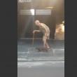 VIDEO Cane paziente, cammina vicino al suo anziano padrone 2
