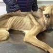 Barilla, il cane salvato dal baratro della morte 01