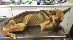 Barilla, il cane salvato dal baratro della morte FOTO