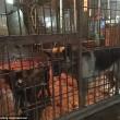 FOTO-VIDEO: Cina, cani e gatti cucinati al festival del cibo07