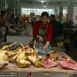 FOTO-VIDEO: Cina, cani e gatti cucinati al festival del cibo09
