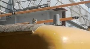 FOTO Gatto sul treno ritarda la partenza