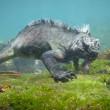"YOUTUBE ""Godzilla"" marino: lucertola gigante sott'acqua"