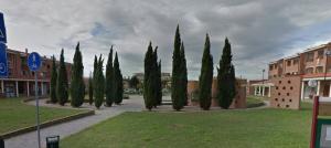 Guarda la versione ingrandita di Ladronaia (Livorno): pugni e calci al parco, in pieno giorno