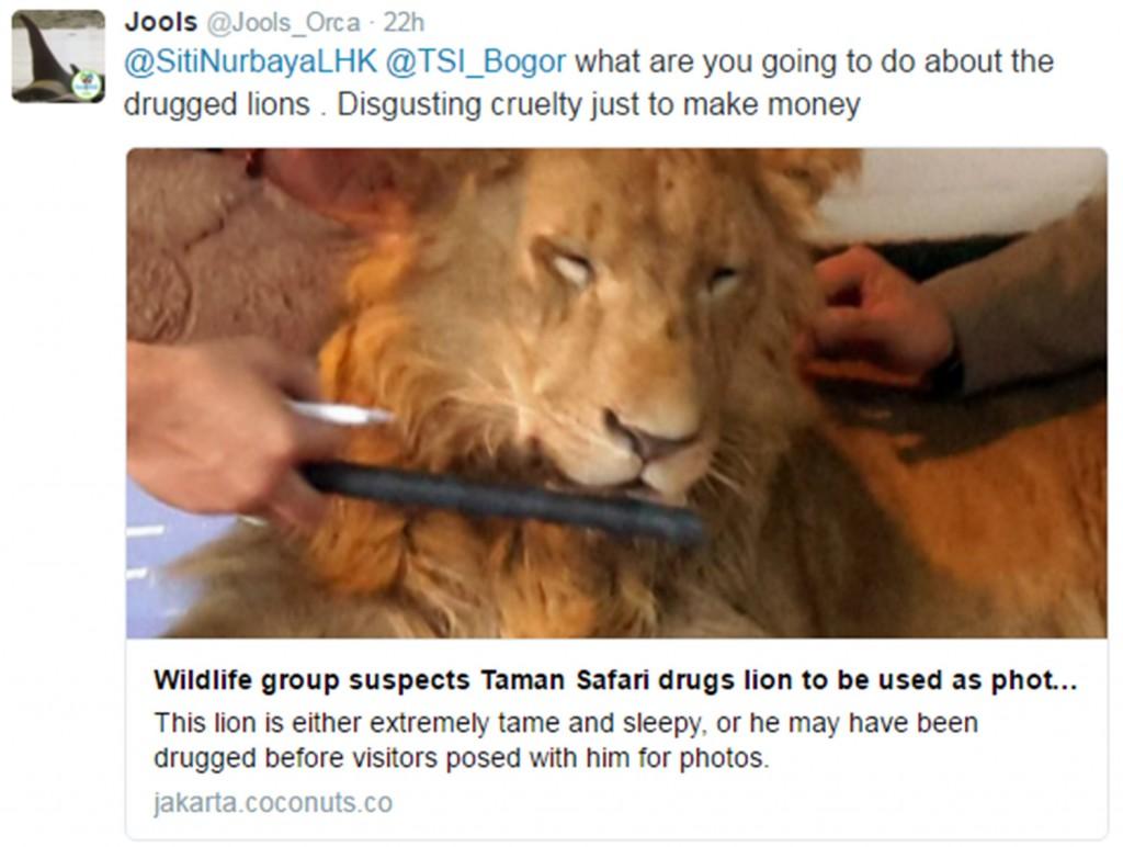YOUTUBE Leone drogato per fare i selfie coi turisti03