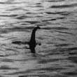 Loch Ness, mostro avvistato ma...era solo una replica FOTO 3