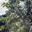YOUTUBE Clandestini nei boschi stanati da telecamera nascosta02