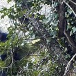 YOUTUBE Clandestini nei boschi stanati da telecamera nascosta03