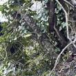 YOUTUBE Clandestini nei boschi stanati da telecamera nascosta01