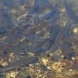 YOUTUBE Genova: petrolio in Pianego, Fegino, Polcevera FOTO7