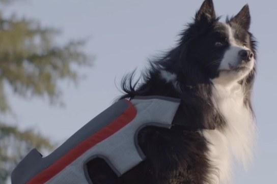 Youtube posting tail cani e gatti foto su fb da soli for Youtube cani e gatti