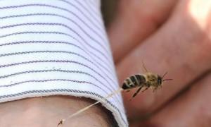 Punta da una vespa: muore in ospedale a 52 anni