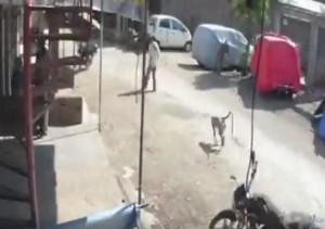 Guarda la versione ingrandita di VIDEO YOUTUBE Scimmia colpisce uomo alle spalle e...