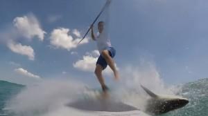 YOUTUBE Squalo butta giù il surfista e poi...